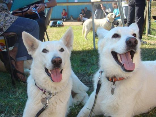 Brise et Cody à Bourail