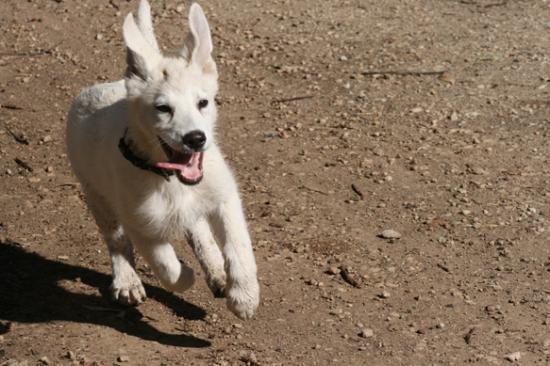 Cody qui coure